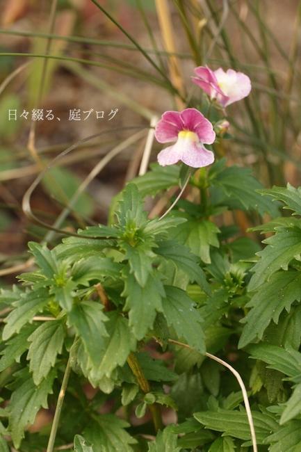 f:id:m-garden-life:20180121155803j:plain
