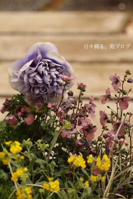 f:id:m-garden-life:20180123164819j:plain