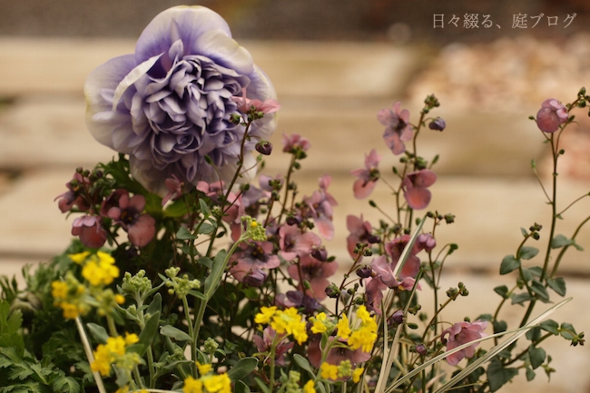 f:id:m-garden-life:20180123170742j:plain
