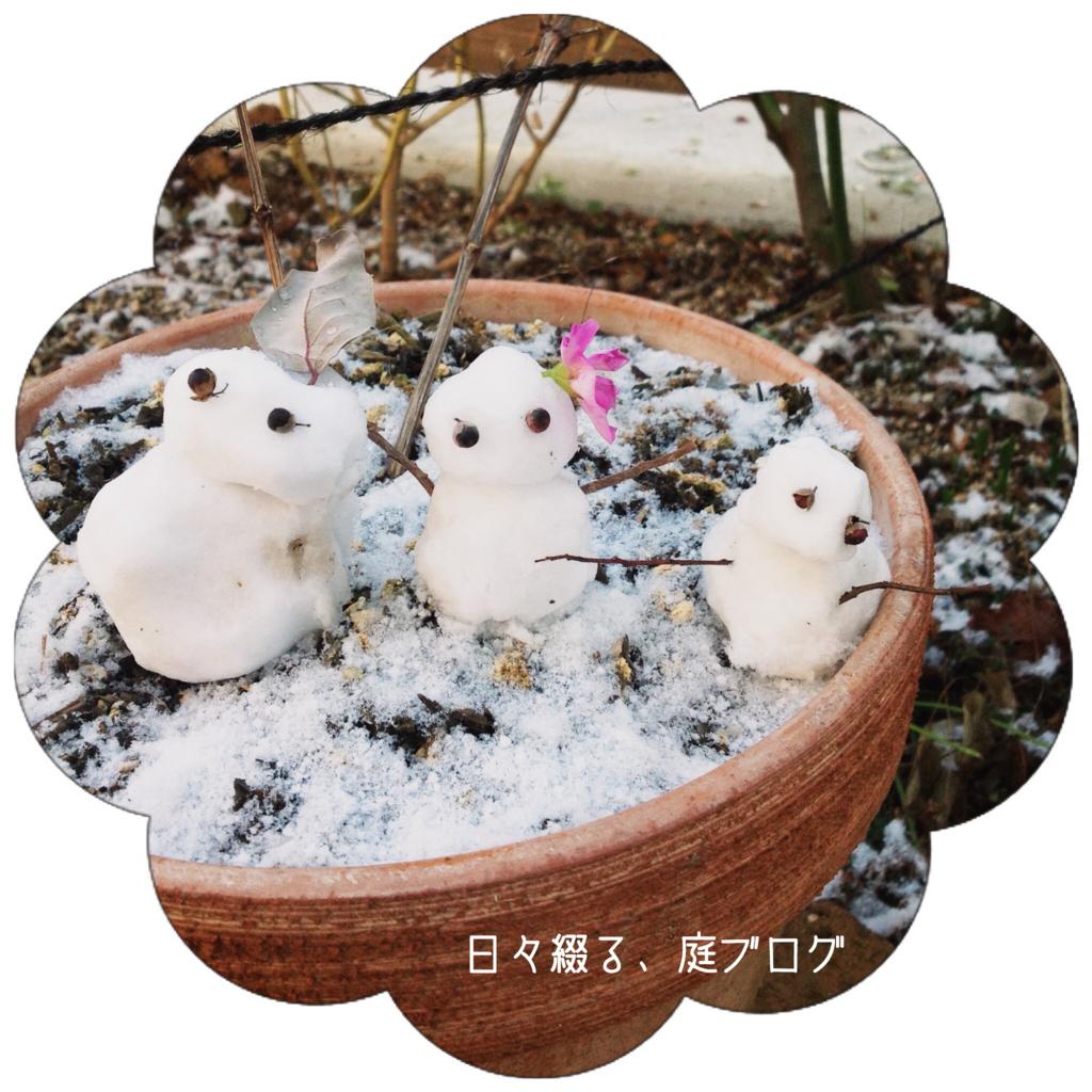 f:id:m-garden-life:20180127084933j:plain
