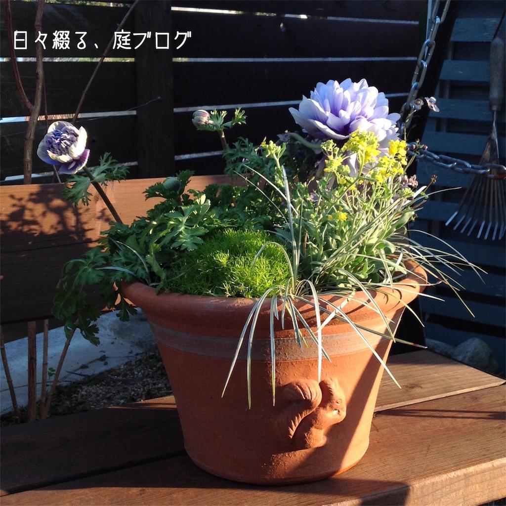 f:id:m-garden-life:20180208163209j:image