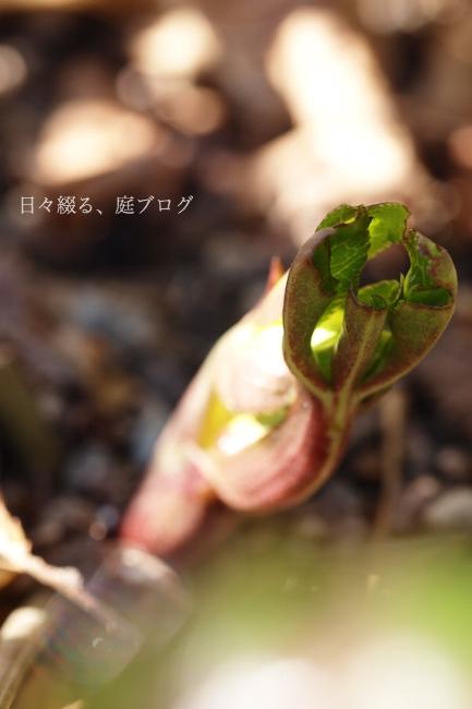 f:id:m-garden-life:20180217120535j:plain