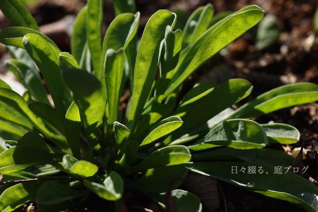 f:id:m-garden-life:20180217120613j:plain
