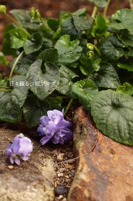 f:id:m-garden-life:20180221152042j:plain