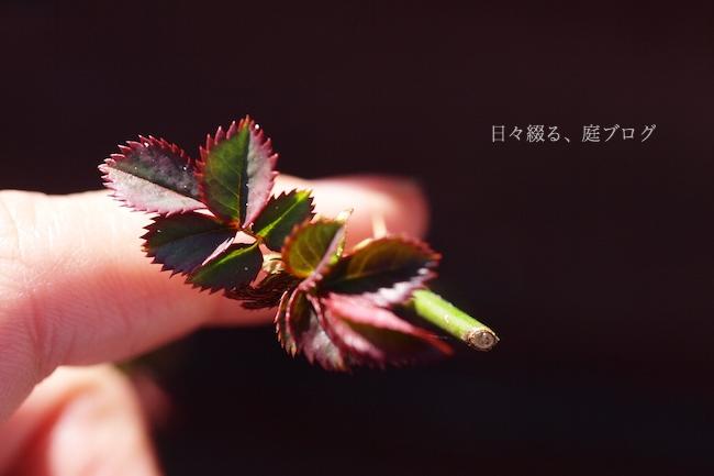 f:id:m-garden-life:20180310203145j:plain