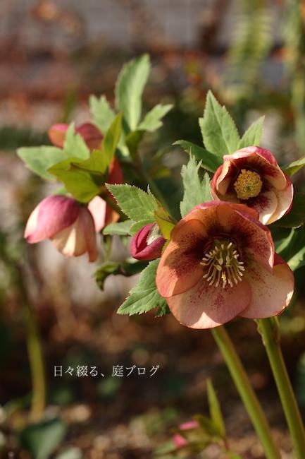 f:id:m-garden-life:20180313173407j:plain