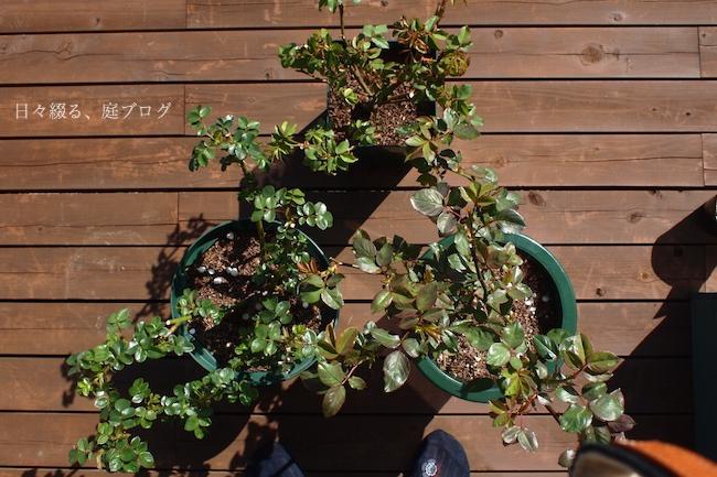 f:id:m-garden-life:20180317145047j:plain