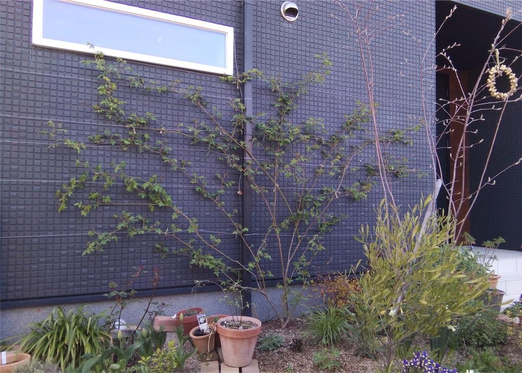 f:id:m-garden-life:20180327165621j:image