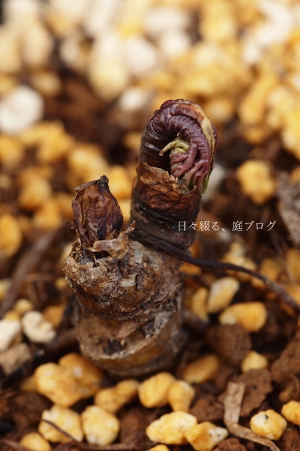 f:id:m-garden-life:20180327191123j:plain