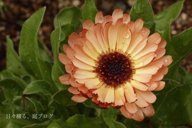 f:id:m-garden-life:20180401150311j:plain