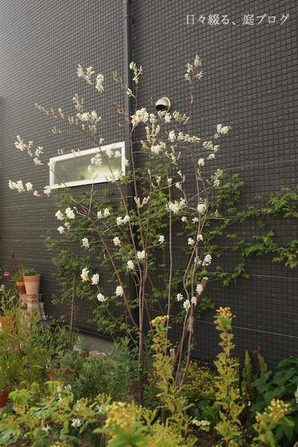 f:id:m-garden-life:20180401150437j:plain