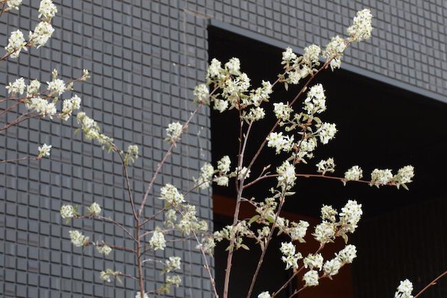 f:id:m-garden-life:20180404201223j:plain