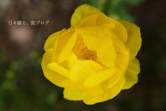f:id:m-garden-life:20180410160244j:plain