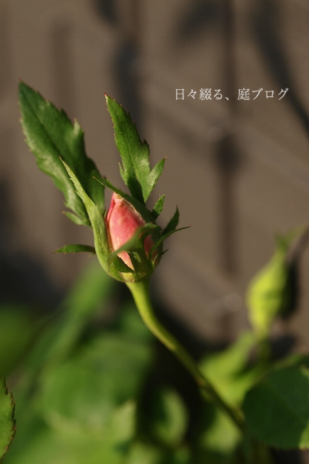 f:id:m-garden-life:20180410161320j:plain