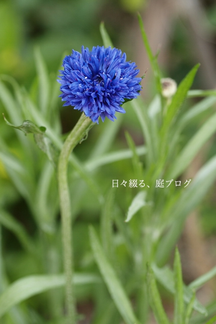 f:id:m-garden-life:20180410161648j:plain