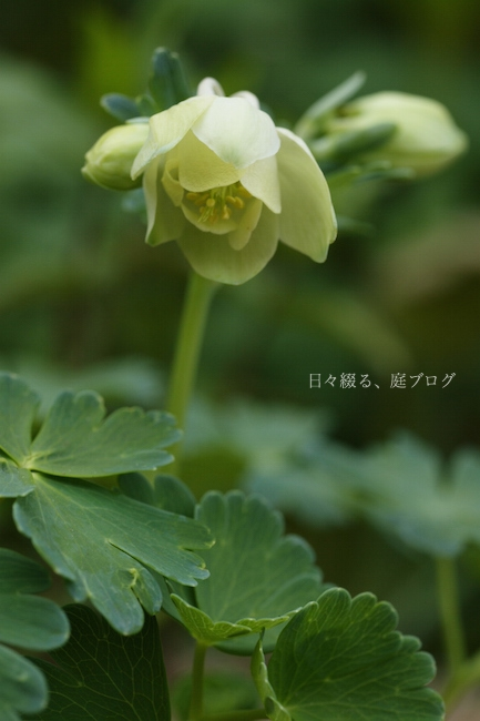 f:id:m-garden-life:20180410163544j:plain