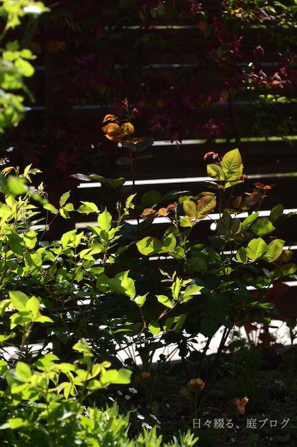 f:id:m-garden-life:20180413103343j:plain