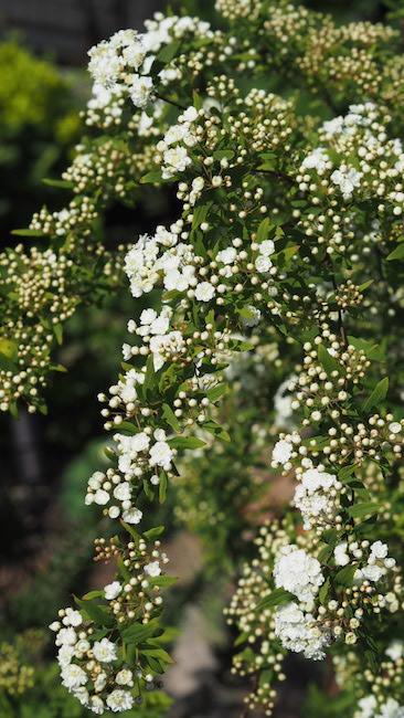 f:id:m-garden-life:20180413103839j:plain