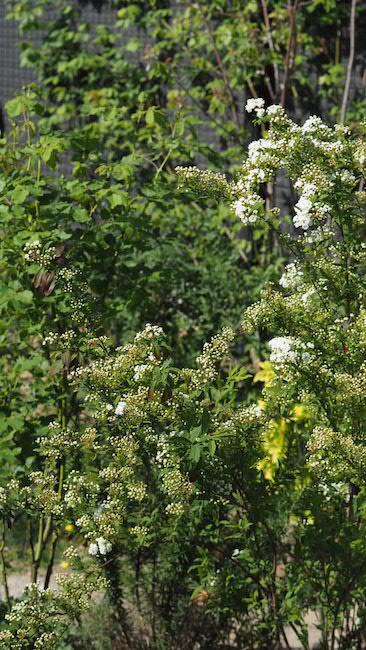 f:id:m-garden-life:20180413104032j:plain