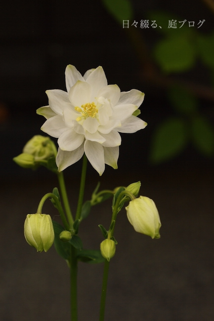 f:id:m-garden-life:20180416164049j:plain
