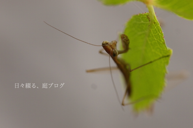 f:id:m-garden-life:20180416171354j:plain