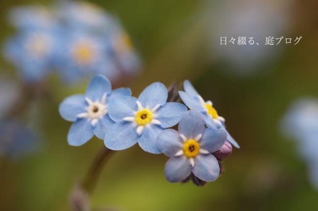 f:id:m-garden-life:20180416172406j:plain