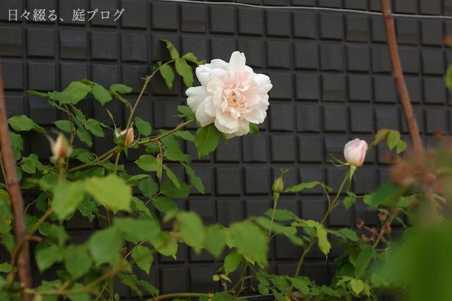 f:id:m-garden-life:20180422152216j:plain