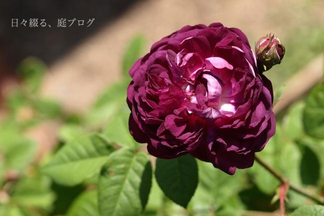 f:id:m-garden-life:20180422152323j:plain
