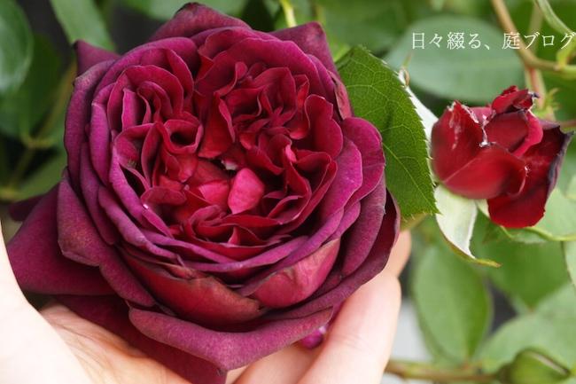 f:id:m-garden-life:20180422152352j:plain