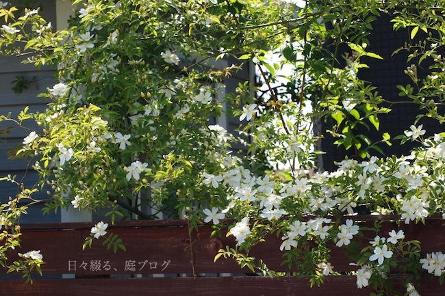 f:id:m-garden-life:20180422153804j:plain