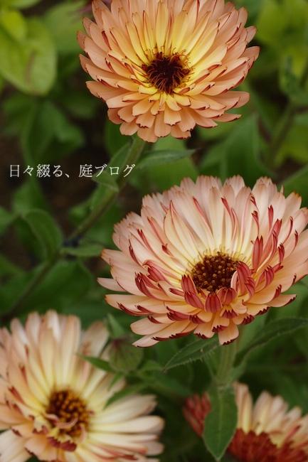 f:id:m-garden-life:20180422153924j:plain