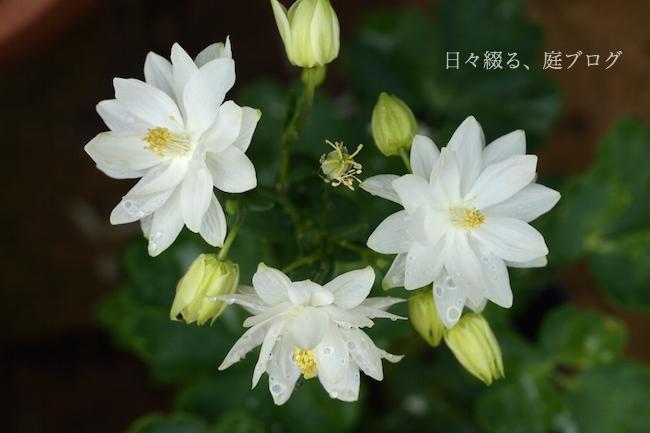 f:id:m-garden-life:20180422154205j:plain