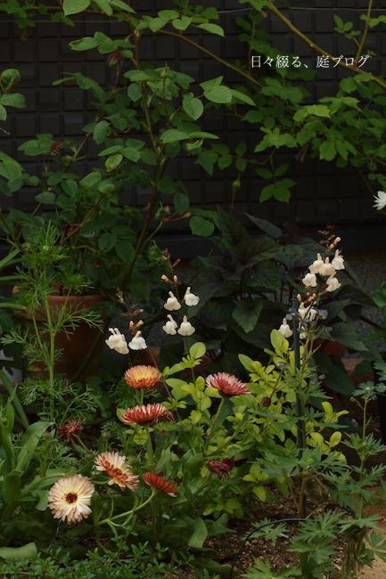 f:id:m-garden-life:20180422154516j:plain