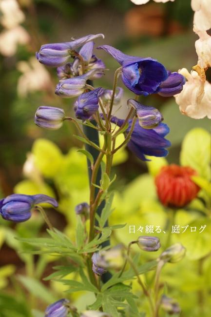 f:id:m-garden-life:20180426185930j:plain