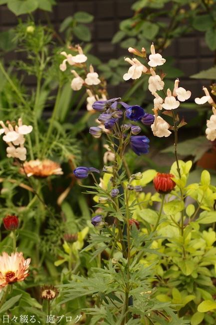 f:id:m-garden-life:20180426190107j:plain