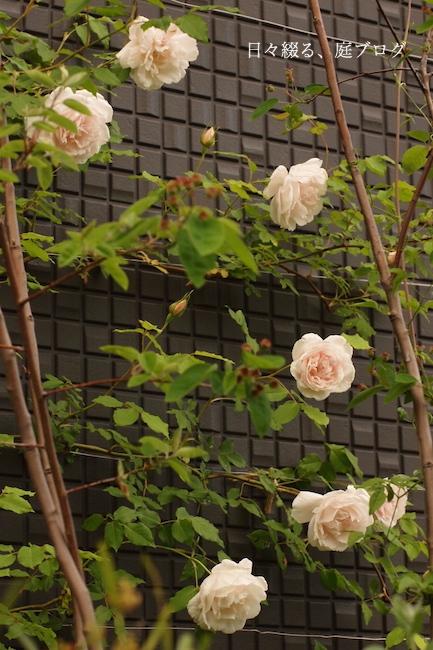 f:id:m-garden-life:20180426190416j:plain