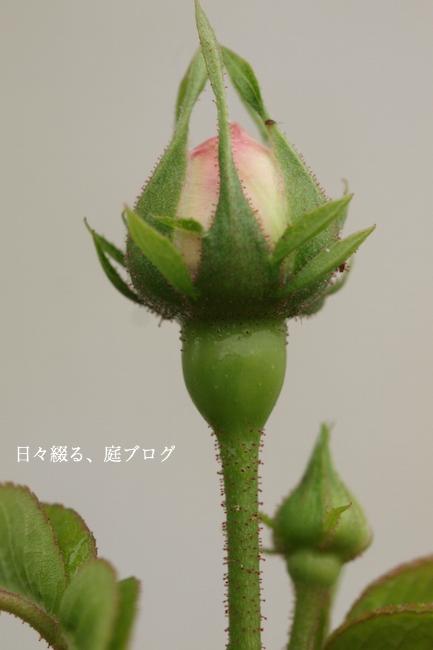 f:id:m-garden-life:20180426190721j:plain