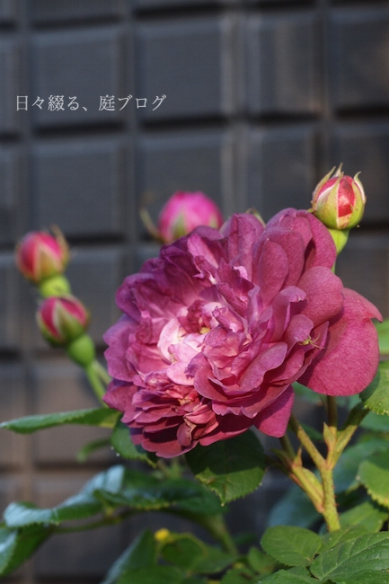 f:id:m-garden-life:20180428184445j:plain