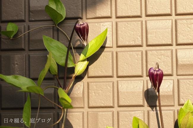 f:id:m-garden-life:20180428184627j:plain