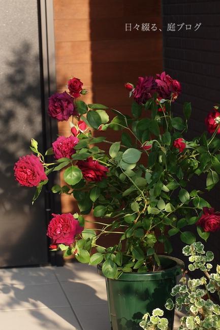 f:id:m-garden-life:20180428190727j:plain