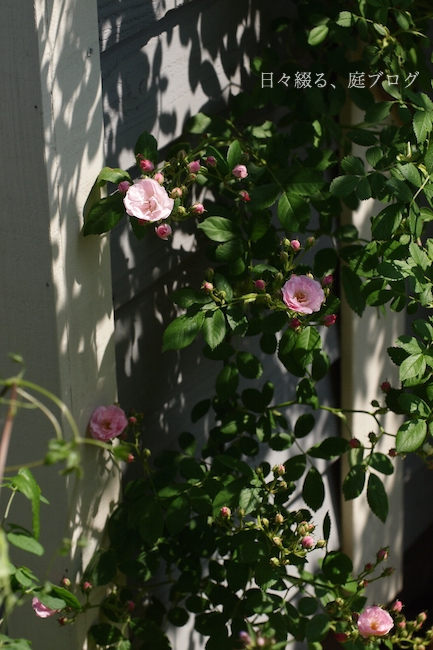 f:id:m-garden-life:20180430153526j:plain
