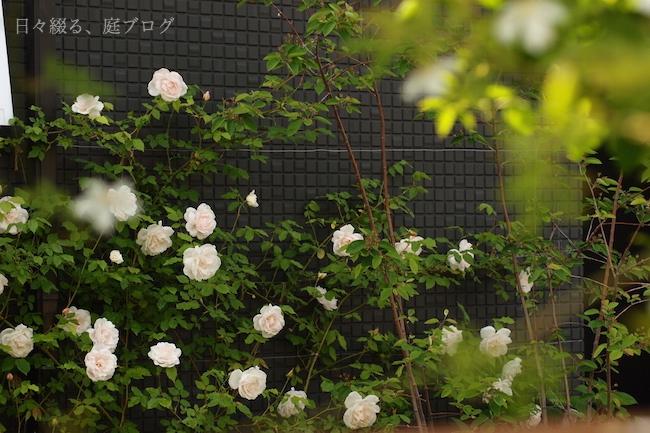 f:id:m-garden-life:20180430154010j:plain