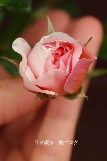 f:id:m-garden-life:20180502110428j:plain