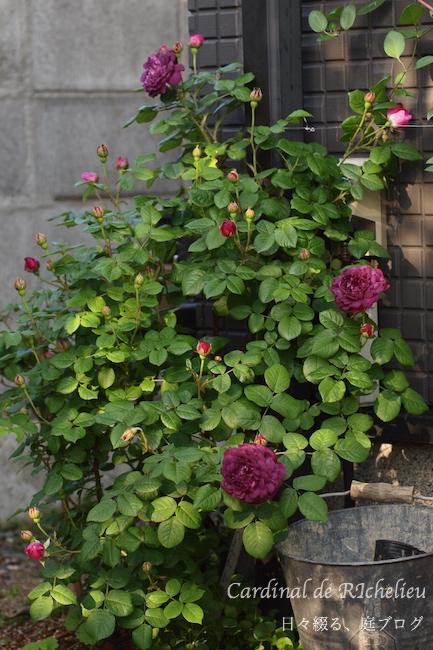 f:id:m-garden-life:20180502185708j:plain