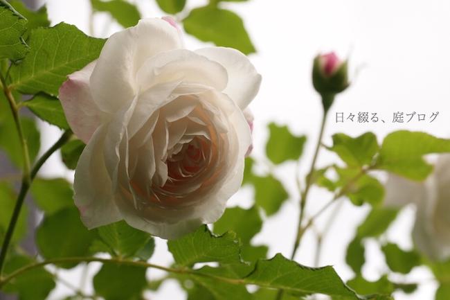f:id:m-garden-life:20180503171252j:plain