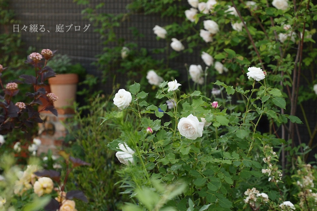 f:id:m-garden-life:20180503171825j:plain
