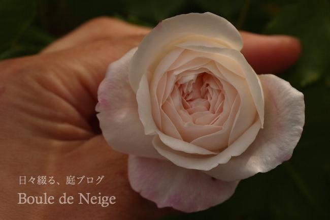 f:id:m-garden-life:20180503172525j:plain