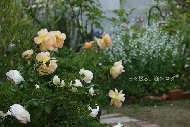 f:id:m-garden-life:20180503173014j:plain