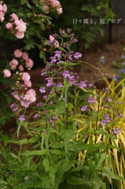 f:id:m-garden-life:20180504183735j:plain
