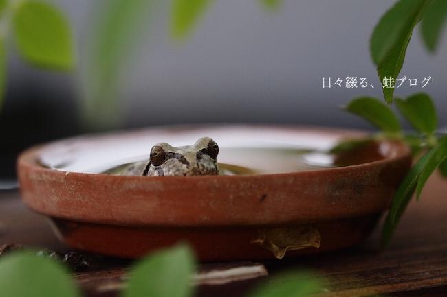 f:id:m-garden-life:20180505183810j:plain